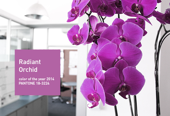 Color of year 2014 in WILDDESGIN office